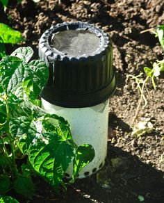 how to use worm castings in vegetable garden