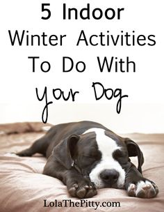 5 Indoor Activities To Do With Your Dog - @Lola The Pitty