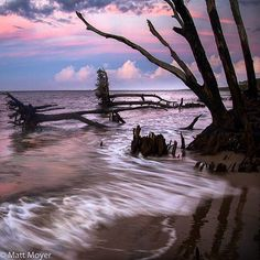 Photo by @mattmoyerphoto // (7 of 8) Boneyard Beach on Big Talbot Island State Park at sunset. To read more about my assignment in Florida check out the blog post in my profile link @mattmoyerphoto. To read more about how I made some of the photos during