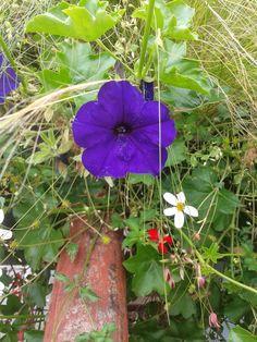 Une Belle Fleur sur Dreux ... ! ! !