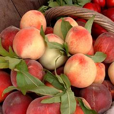 Peach Aesthetic, Nature Aesthetic, Summer Aesthetic, Aesthetic Food, Just Peachy, Aesthetic Pictures, Pretty Pictures, Beach Pictures, Fruits And Veggies