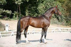 Image - le oldenburg - les races de chevaux - Skyrock.com
