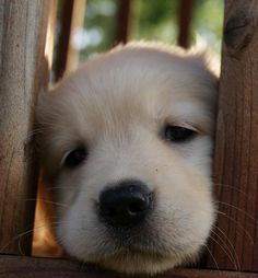 Sweet puppy nose.