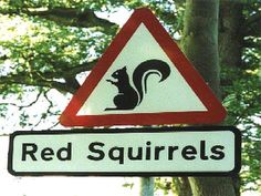 Save our Squirrels, a fantastic charity protecting Red's and re-introducing to Cumbria