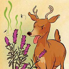 How to Keep Plant-Eating Animals at Bay - Plants Deer Dislike. landscaping around your home with plants that deer's dislike is your best defense Deer Resistant Garden, Deer Repellant, Bees And Wasps, Garden Animals, Humming Bird Feeders, Fruit Garden, Garden Pests, Types Of Plants, Bye Bye