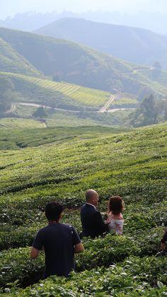 Campos de chá da Malásia, Cameron Highlands | Viaje Comigo Cameron Highlands, Kuala Lumpur, Mountains, Nature, Travel, Fields, Traveling, Naturaleza, Viajes