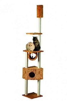 Kratzbaum Kletterbaum Eck-Kratzstamm honig von Silvio Design - http://www.kratzbaum-bestellen.de/produkt/kratzbaum-kletterbaum-eck-kratzstamm-honig-von-silvio-design/