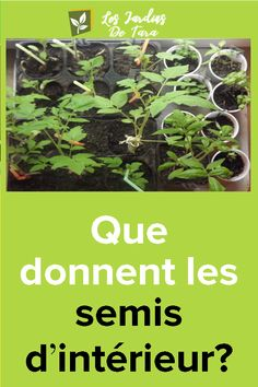 Que donnent les semis d'intérieur?