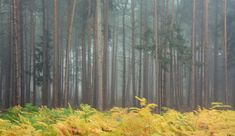 Love this time of the year for misty light, autumn colours and the changing season. There's a small clearing deep in Severals Woods near Midhurst where bracken grows. I caught it on the turn – a patch of yellow in sea of grey trees. Gray Tree, Autumn Colours, Time Of The Year, Woods, My Photos, Trees, Seasons, Yellow, Painting