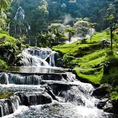 Mossy hot springs in Equador