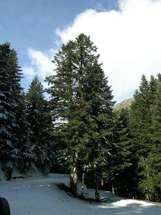 Bosc del Jardà - Pallars Sobirà