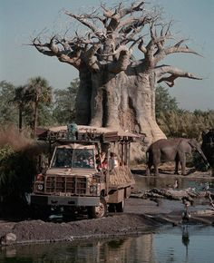 Disney Animal Kingdom: Kilimanjaro Safaris. My favorite, ride at least 2-3 times a day while in the park.