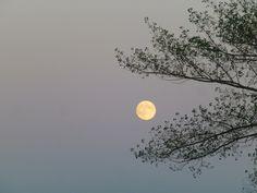 The Moon by Alex AskMe - Photo 87347247 - 500px