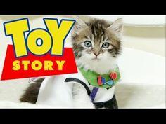 Disney Pixar's Toy Story (Cute Kitten Version) - https://funnypetvideos.net/disney-pixars-toy-story-cute-kitten-version/