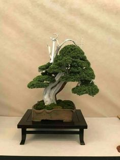 Juniper Bonsai, Plantas Bonsai, Bonsai Styles, Lone Tree, Ikebana, Indoor Outdoor, Patio, Japanese, Landscape