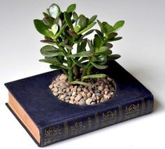 Book for pot plant