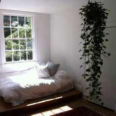 "Long hanging bedroom plant! Epipremnum aureum: Pathos, or the money plant aka ""The Specialist"" removes harmful chemicals. (Must hang-- toxic to kitty)"