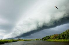Pantanal Wetland, South America, #Brazil  Luciano Candisani Photography