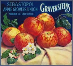 Sebastopol Gravensteins Apple Label – Sonoma, CA