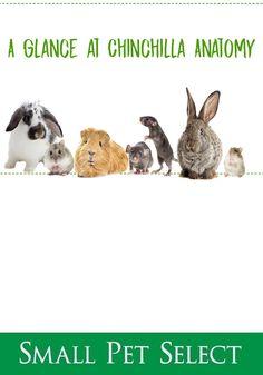 Small Pet Carrier, Pet Ferret, Exercise Wheel, Gerbil, Pet Safe, Pet Carriers, Guinea Pigs, The Selection, Fun Facts