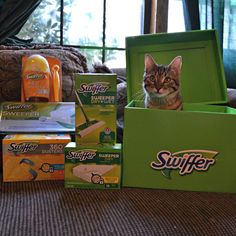 Shed happens but it doesn't have to be an obstacle to bonding time with your pet! Did you know that daily grooming is great for bonding with your pet?And @Swiffer is there to help with cleanup! Join us on our blog for a #giveaway and get your paws on your very own Big Green Box full of #SwifferFanatic products. #sponsored #cats #pets #animals #cleanup #contests #catsofinstagram #catlovers #petlovers #cuteanimals #cutecats #catoftheday #meow