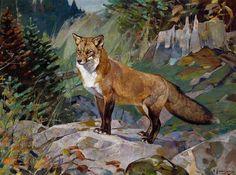 Carl Rungius - Red Fox