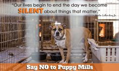 Our lives begin to end the day we become SILENT about things that matter. Speak out against puppy mills. #nomorepuppymills