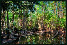 Cypress Dome Gator Hole, Everglades National Park, Florida (Photo by Kim Yoeung Seng)