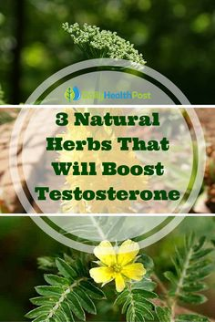 Low testosterone can be a problem for men and women. Often the latter is not so well known, and a lack of it here can cause a woman to struggle to conceive. Both of the sexes are at an increased risk of heart problems, osteoporosis, dementia, and a condition called andropause if they do not resolve their low testosterone levels.