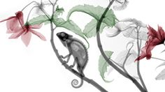 En fotos: radiografías de la naturaleza - BBC Mundo - Video y Fotos