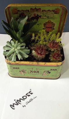 Dikiş Kutusu Plant Design, Indoor Plants, Decorative Boxes, Gardens, Home Decor, Inside Plants, Decoration Home, Room Decor, Outdoor Gardens