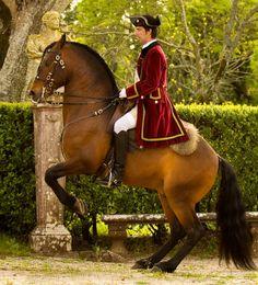 Cavalo Alter-real! Raça portuguesa. Alter-Real horse! Portuguese breed