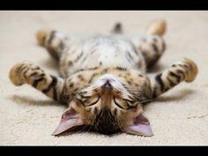 ❤Los Videos más tiernos de gatitos 2016❤ Perritos cachorros conociendo gatos :) - YouTube