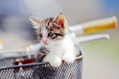 How much do you know about Feline Lower Urinary Tract Disease? Here's what you need to know: http://www.entirelypets.com/flutd-feline-lower-urinary-tract-disease.html?utm_source=twitter&utm_medium=web&utm_campaign=eptwpostarticle