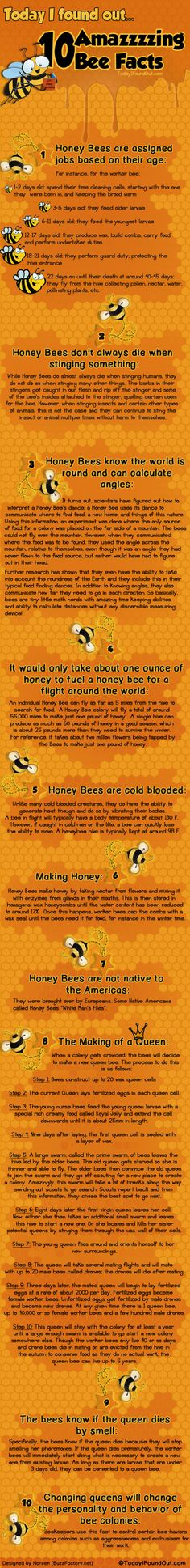 Let we learn some bee facts! Bees are amazing insects with a complex world of their own. Find out more about this amazing world, right now! Click!