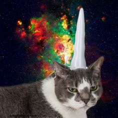 unicorn cat in space
