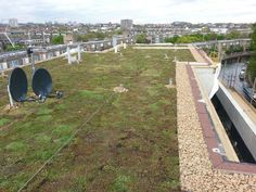 Amberely Road green roof