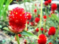 flower korea - Google Search