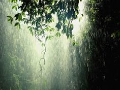 Rain In The Forest