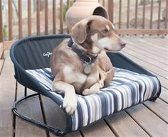 Casual Cot (Raised Pet Bed) great for Dogs and Cats. available in 3 sizes $49 via @shopseen
