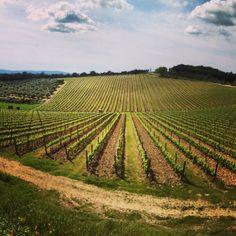 #chianti #tuscany #vineyard #vigna... | Tuscanygram | Tuscany Storytelling via Instagram