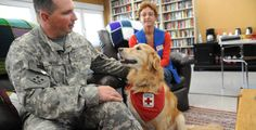 The Red Cross offers free training for volunteers and their pets who are interested in becoming Animal Assisted Therapy volunteers. Pets obtain pet therapy certification (no cost involved) and begin volunteering. Owners and their pets can make visits on their own or as part of a group.
