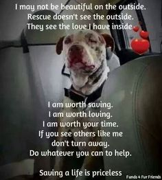 oneloveanimalrescue:  Saving a life is priceless!