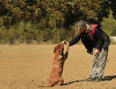 10 cosas que los perros odian de los humanos - 4. Falta de estructura Treasure Hunt Games, Behavior Modification, Dog Runs, Dog Behavior, Shelter Dogs, All Dogs, Cat Toys, Dog Owners, Dressage