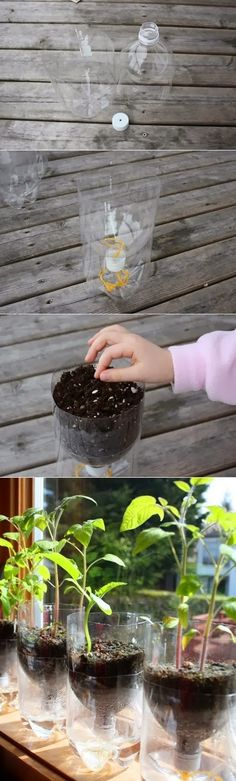 DIY : Self Watering Containers by Hairstyle Tutorials