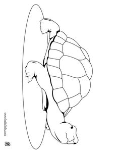 coloring book pages to print | TURTLE to color in - Cute turtle coloring page