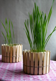 ridiculously cute for how easy it is to make. just some clothes pins around an empty tuna can with a little plant or candle in it!