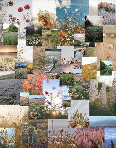 Wildflower collage! 🌸🌺🌷🌻🌼