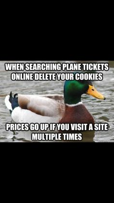 Plane tix prices Duck Pictures, Funny Duck, Flat Tire, Airline Tickets, Live Happy, A Good Man, Cleaning Hacks, Life Lessons, Something To Do