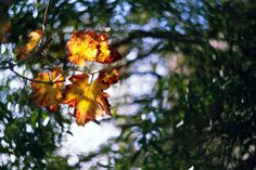 autumn breathe ∞